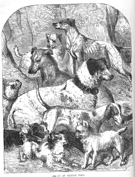 1853-dogs