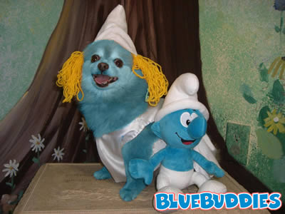 Dog Dressed Like Smurfette