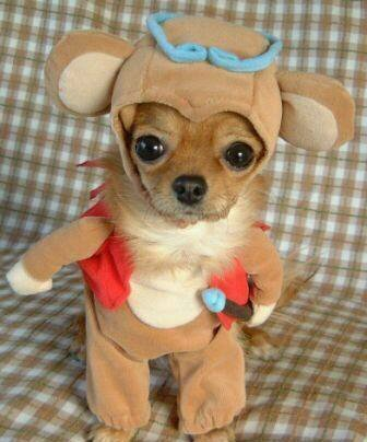 dressed-up-dog