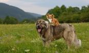 Moj odrasli psić se od straha baca na leđa pred većim psima - a bojim ih se i ja....