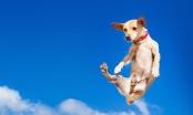 Kako prehrana utječe na zdravlje pasa? Knjiga koja me šokirala...