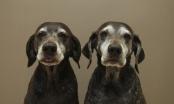 Kako izračunati pseće godine?