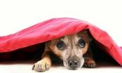 Imamo jako plahu kuju - želimo joj pomoći! Kako dalje?