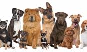 Genetski testovi pasa na nasljedne bolesti - zašto, kako i gdje?