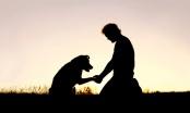 Što su to točno problemi u ponašanju pasa?
