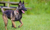 Problemi s psima lutalicama i aktivnim psom