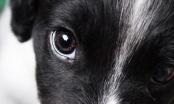 Kako psi vide?