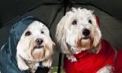 Trebaju li psima kaputići?