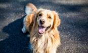 HRT prilog o tome kako (NE) kupovati psa