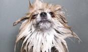 Zašto je grooming više od frizure?