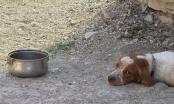 Psi su za neke ljude samo alat! Razgovor s Mae Isaksson o psima i tartufima, a i šire...