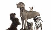 Neki psi žive duže od drugih, ali svi žive - prekratko!