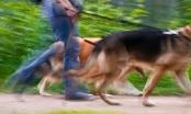 10 stvari koje vlasnici pasa nikada ne bi smjeli (iz)govoriti