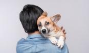 Zašto je okej tješiti uplašenog psa