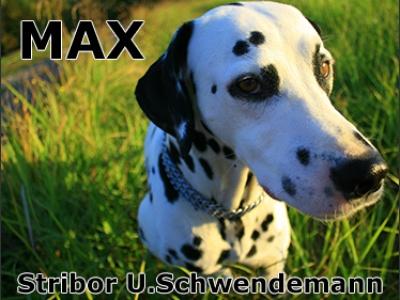 Stribor U. Schwendemann - ulomak iz knjige Max