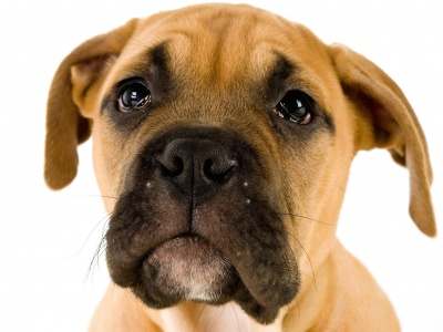 Dr. Ian Dunbar - Zašto pas ne bi smio biti pas?