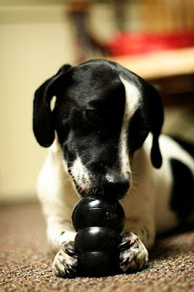 400px-Dog with black KONG toy