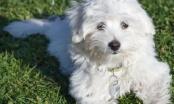 Pasmine po namjeni - psi za igru i društvo